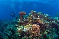Plongeur sur le reaf photographie stock libre de droits