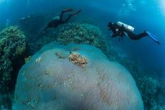 Plongeur sur le reaf photos libres de droits