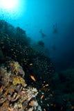 Plongeurs au-dessus d'un récif coralien Images stock