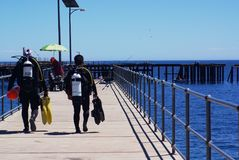 Plongeurs autonomes à la baie rapide photo libre de droits