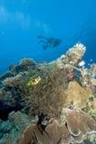 Plongeurs autonomes dans le cristal - l'eau claire Images libres de droits