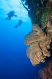 Plongeurs autonomes et récif Photos libres de droits
