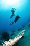 Plongeurs autonomes silhouettés Photos libres de droits
