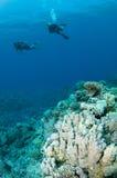 Plongeurs autonomes sur le récif coralien photo libre de droits