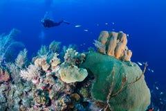 Plongeurs autonomes sur un récif Photo stock