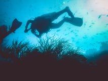 plongeurs et anémone Espèce marine Photographie stock