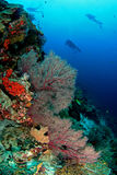 Plongeurs et récif photos libres de droits