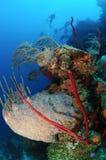 Plongeurs explorant le récif coralien Photos stock