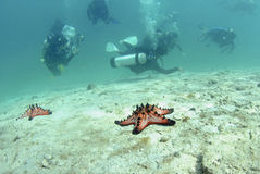 Plongeurs nageant au-dessus de l'étoile de mer image stock