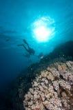 Plongeurs silhouettés au-dessus d'un récif coralien Image libre de droits