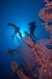 Plongeurs silhouettés au-dessus d'un ventilateur de mer géant Images stock