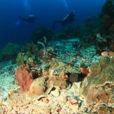 Plongeurs sur le récif coralien photographie stock libre de droits