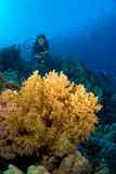 Plongeuse de femme Image stock