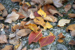 Plot autumn. Colorful leaves on a footpath Stock Image
