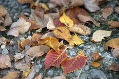 Plot autumn Stock Image