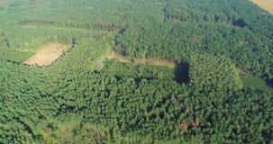 Plot of felled forest, deforestation