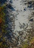 Saline soil containing salt. stock photo