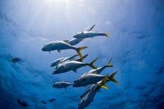 Plots de récif Photographie stock libre de droits