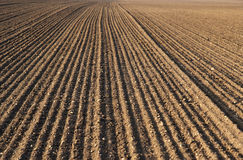 Plough agriculture field. Before sowing Stock Photo