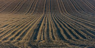 Plough agriculture field. Before sowing Royalty Free Stock Photos