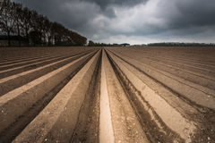 Plough agriculture field after sowing Royalty Free Stock Photography