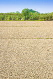 Plough agriculture field before sowing Royalty Free Stock Photography
