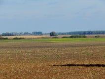 Plough-land en bos op horizon royalty-vrije stock afbeelding