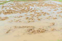 Plough rice field before seeding season at countryside of Thailand Stock Photography