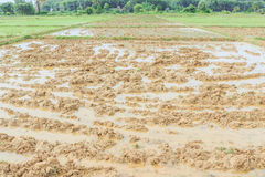 Plough rice field before seeding season Royalty Free Stock Images