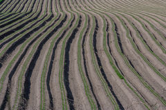 Ploughed even ridges. /ploughed/ploughed field Stock Photo