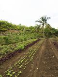 Ploughed farm land in Balamban, Cebu, Philippines. Ploughed tropical vegetable farm land in Balamban City, Cebu, Philippines Royalty Free Stock Photos