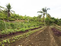 Ploughed farm land in Balamban, Cebu, Philippines. Ploughed tropical vegetable farm land in Balamban City, Cebu, Philippines Stock Photos