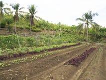 Ploughed farm land in Balamban, Cebu, Philippines. Ploughed tropical vegetable farm land in Balamban City, Cebu, Philippines Stock Images