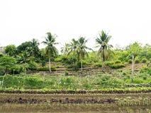 Ploughed farm land in Balamban, Cebu, Philippines. Ploughed tropical vegetable farm land in Balamban City, Cebu, Philippines Royalty Free Stock Photo