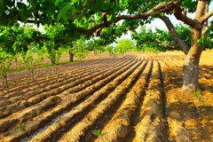 Ploughed farmland Royalty Free Stock Photos