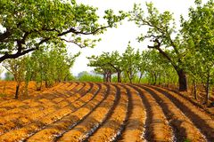 Ploughed Farmland Royalty Free Stock Photography
