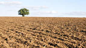 Ploughed Farmland Royalty Free Stock Photo