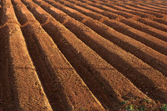 Ploughed farmland Stock Image