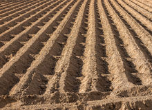 Ploughed Farmland Earth Furrows Stock Images