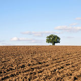 Ploughed Farmland Soil. Ploughed Farmland with a Single Oak Tree in the Distance Royalty Free Stock Image