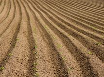 Ploughed field. A ploughed field in the early summer Royalty Free Stock Photo