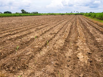 Free Ploughed Field Royalty Free Stock Photography - 33127307