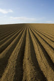 Ploughed field Stock Photography