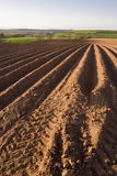 Ploughed field. A ploughed field with furrows moving away in the distance royalty free stock photos