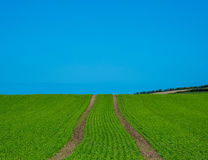 Free Ploughed Field Stock Image - 95900231