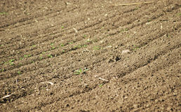 Ploughed field. Ploughed agricultural field in spring Stock Photos