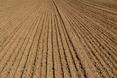 The ploughed field. The arable field. Poor sandy and loamy soil of Central Stock Images