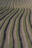 Ploughed field. Ploughed even ridges/ploughed/ploughed field Stock Image