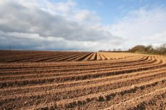 Ploughed Field Furrows. Ploughed furrows in farmers potato field stock photography
