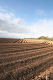 Ploughed Field Furrows. Ploughed furrows in farmers potato field stock images